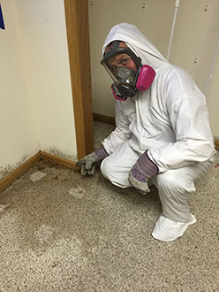 Man in hazmat showing mold